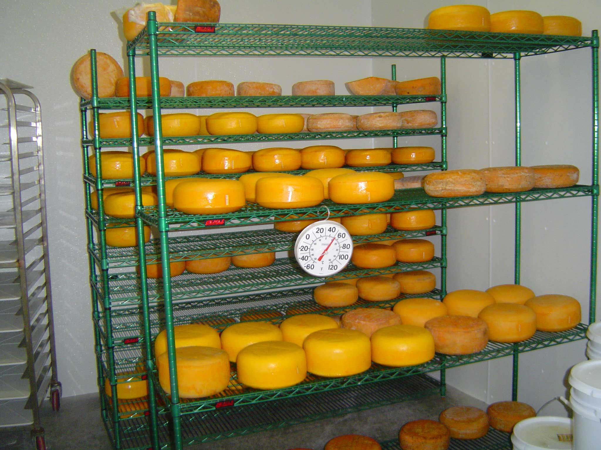 Cheeses in the Ripening Room